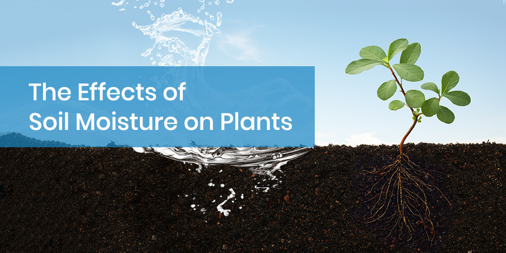 The Effects of Soil Moisture on Plants